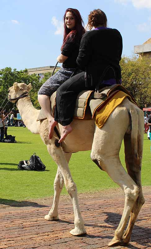 Its a high way up on this camels back.