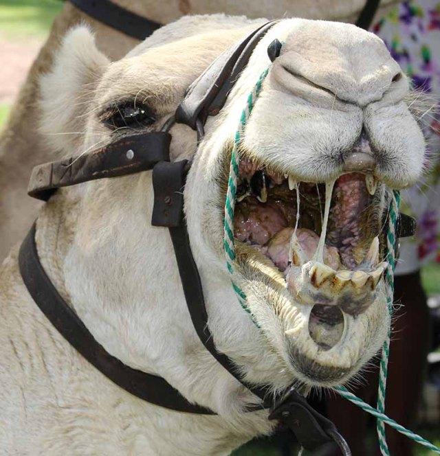 Yep!!! I will now show youn my horrible yelow salvia and rotten teeth!